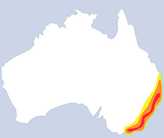 Sydney funnel web distribution map